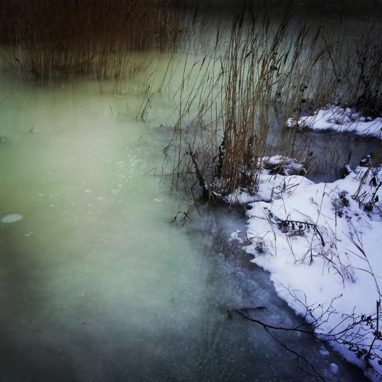 """Isen hos oss"" Photo: Anna Isabella Sandberg 2015"